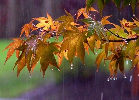 سی سخت رکوردار بارشهای بهاری سال ۹۷