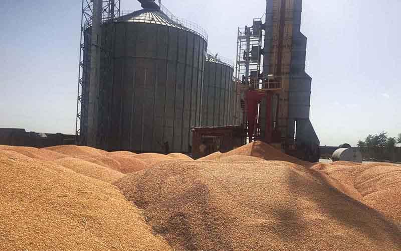 افزایش ۱۰۰ درصدی خریدتضمینی گندم در استان