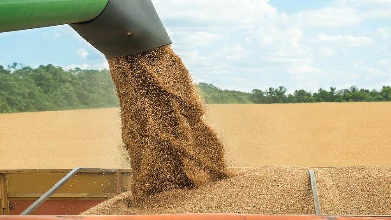 خرید ۳۱ هزار تن گندم از کشاورزان کهگیلویه و بویراحمد